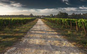 Wine Ageing Methods